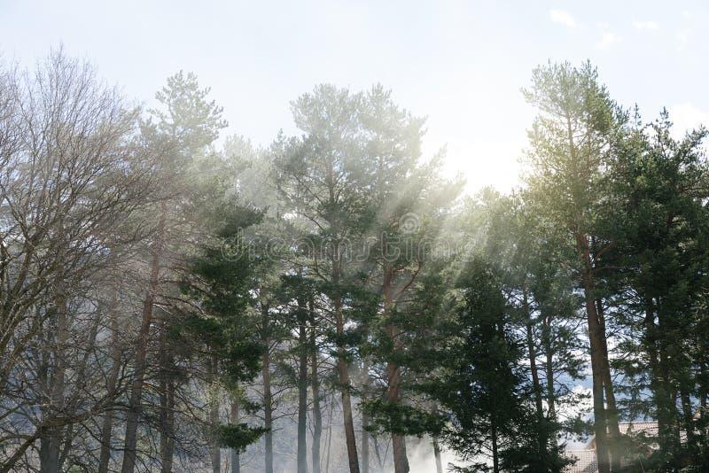 在树之间的上帝光芒 免版税库存图片