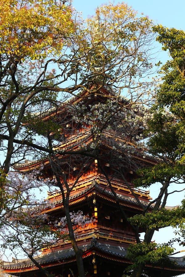 在树内的日本塔在上野公园 库存图片