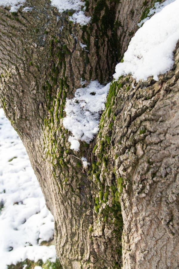 在树冠的雪 免版税库存图片