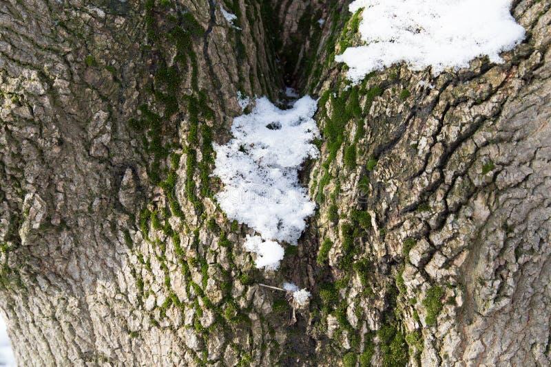 在树冠的雪 库存照片