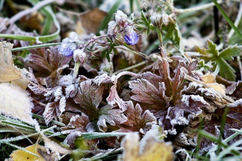 在树冰下的草本 免版税图库摄影