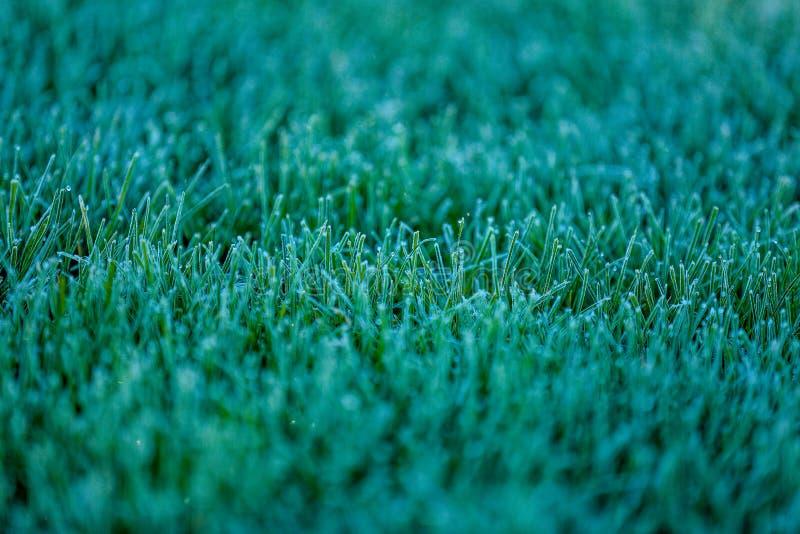 在树冰的接近的看法在绿草 免版税库存照片