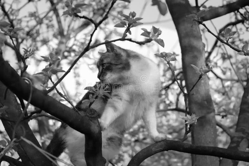 在树分支的一只黑白小猫  免版税库存照片