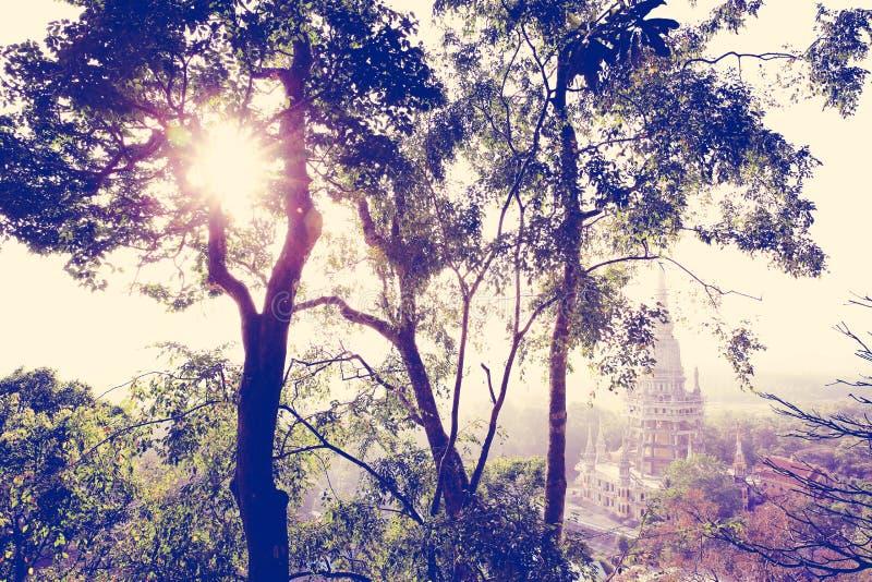 在树叶子中的日出 库存图片