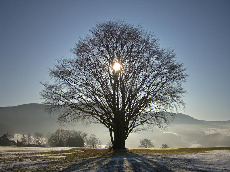 在树后的太阳在冬天 库存图片
