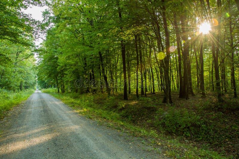 在树后的路通过森林和太阳 免版税库存照片
