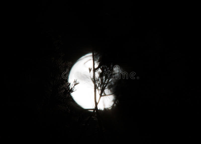 在树后的满月皮 免版税库存图片