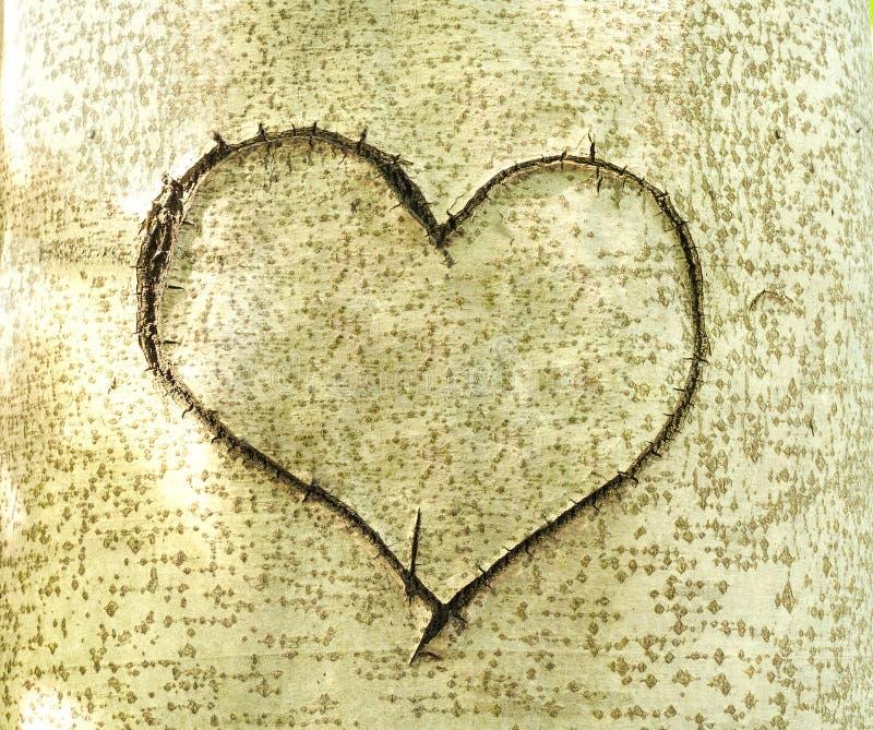 在树吠声雕刻的心脏  库存图片