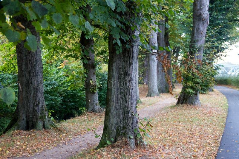 在树和一条脚道路的宽看法在meppen emsland德国 免版税库存照片