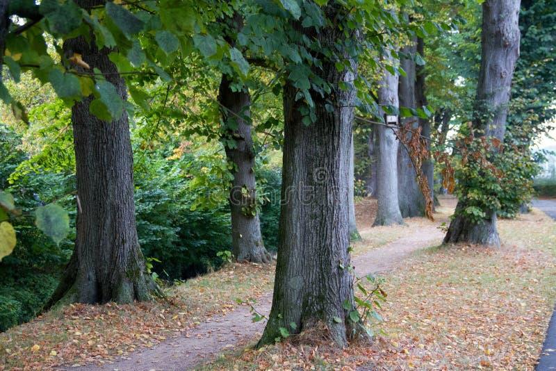 在树和一条脚道路的看法在meppen emsland德国 免版税图库摄影