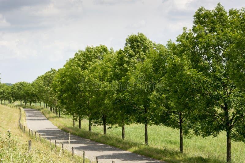 在树和叶子行的看法在一个晴朗的荷兰典型的风景 库存图片