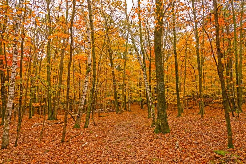 在树和地面上的五颜六色的叶子 免版税库存照片