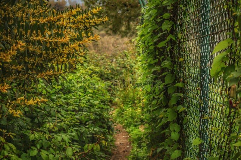 在树和植物中的供徒步旅行的小道在北非 免版税库存图片
