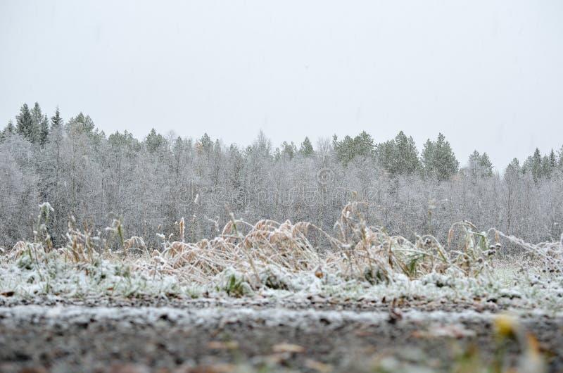 在树和植物的新的雪在晚秋天 免版税库存图片
