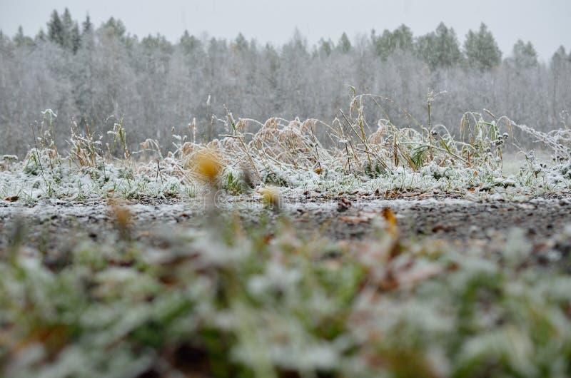 在树和植物的新的雪在晚秋天 免版税库存照片