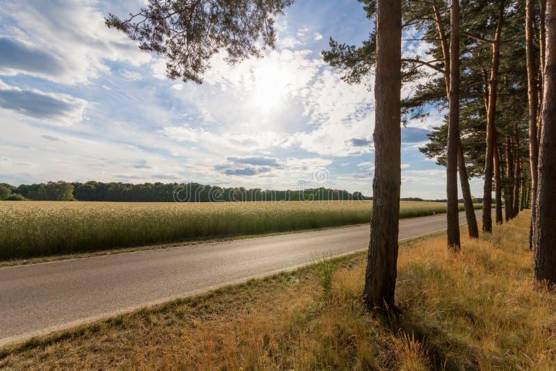 在树和领域附近的空的街道 免版税图库摄影