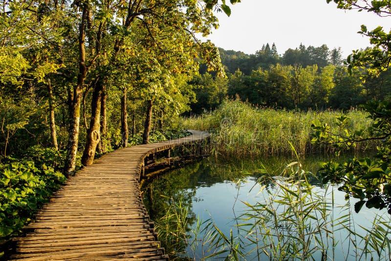在树和水之间的平安的路 库存图片