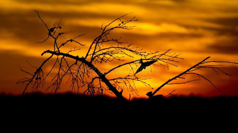 在树外面的鸟飞行在日出 库存图片