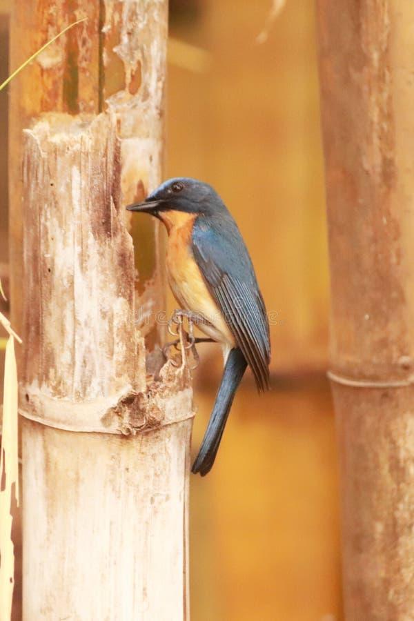在树干栖息的鸟 库存照片