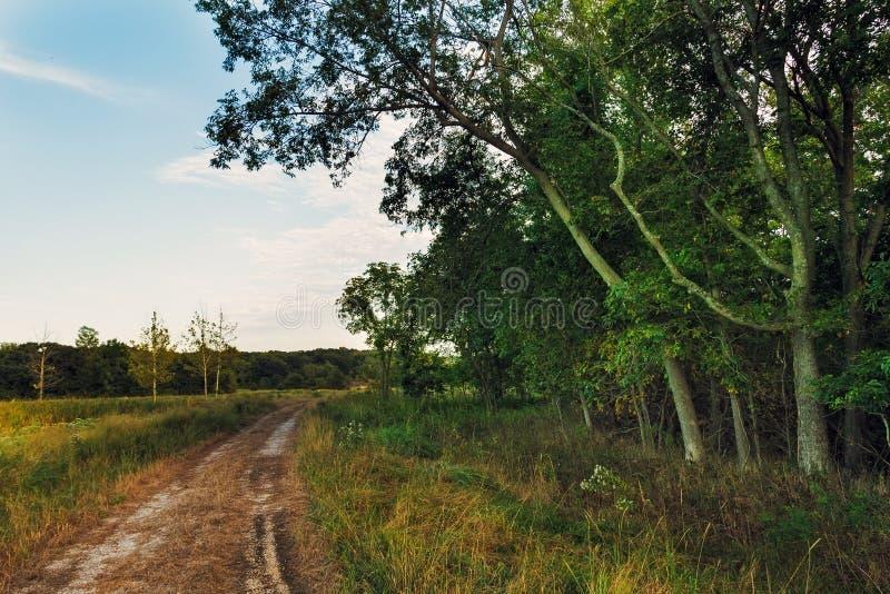 在树旁边的土路 库存照片