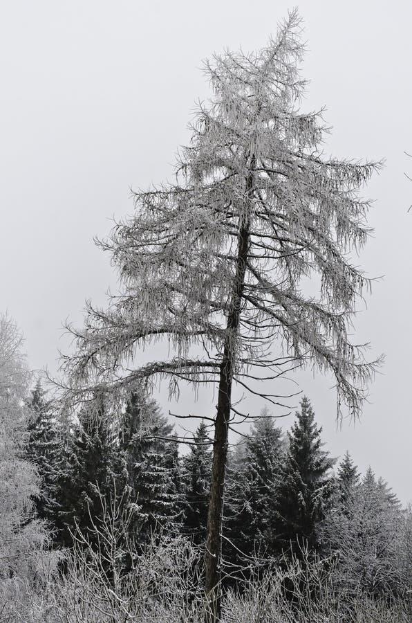 在树木丛生的冬天风景的雪人 免版税图库摄影