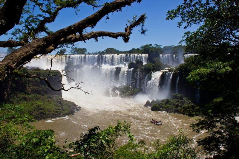 在树枝之间的伊瓜苏瀑布 免版税库存图片