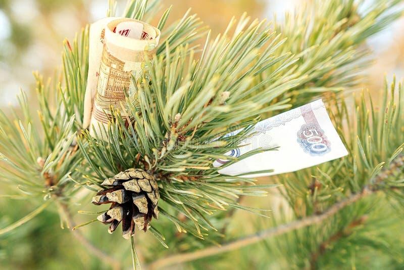 在树枝松树的纸币 库存照片
