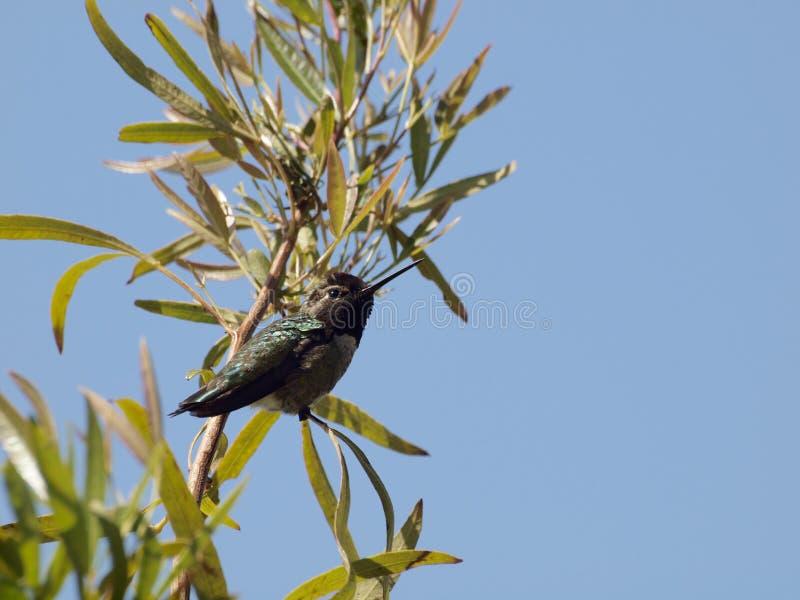 在树枝的哼唱着鸟 库存图片