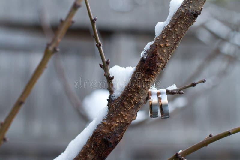 在树枝的婚戒 免版税库存图片