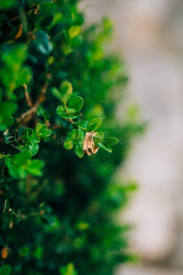 在树枝的婚戒 图库摄影