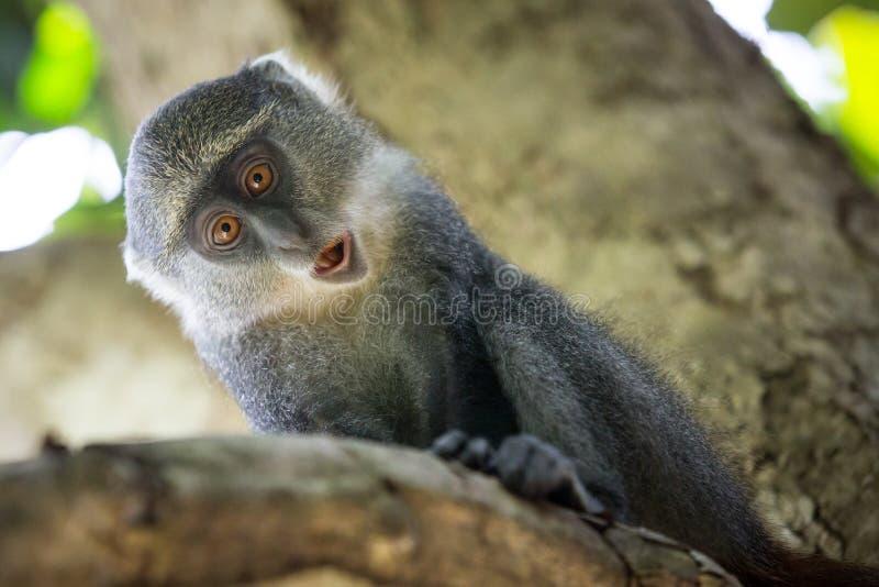 在树枝的滑稽的猴子 免版税库存图片