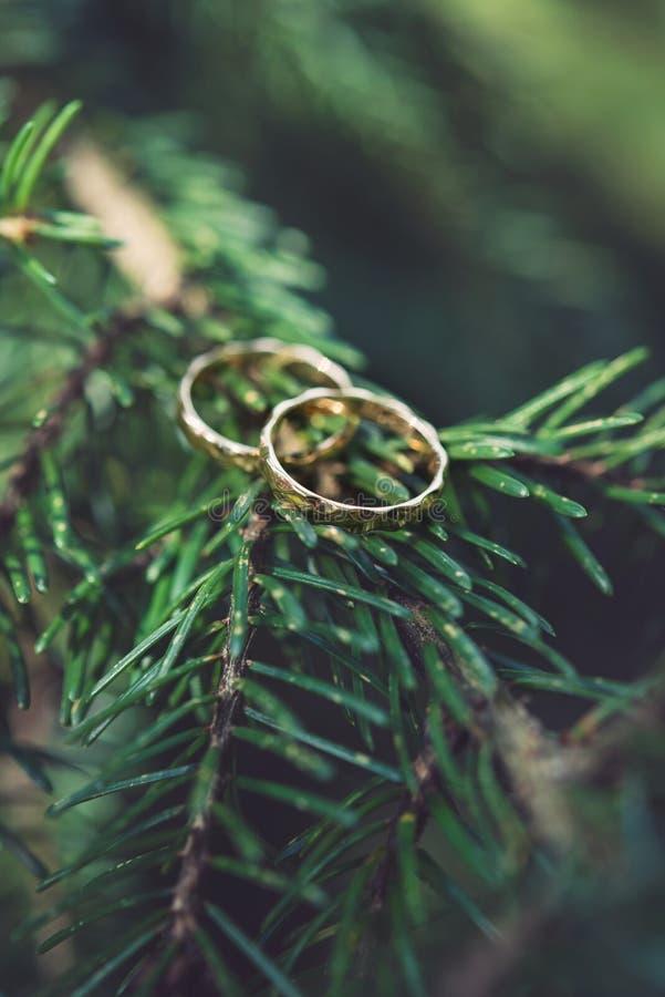 在树枝的结婚戒指 库存照片