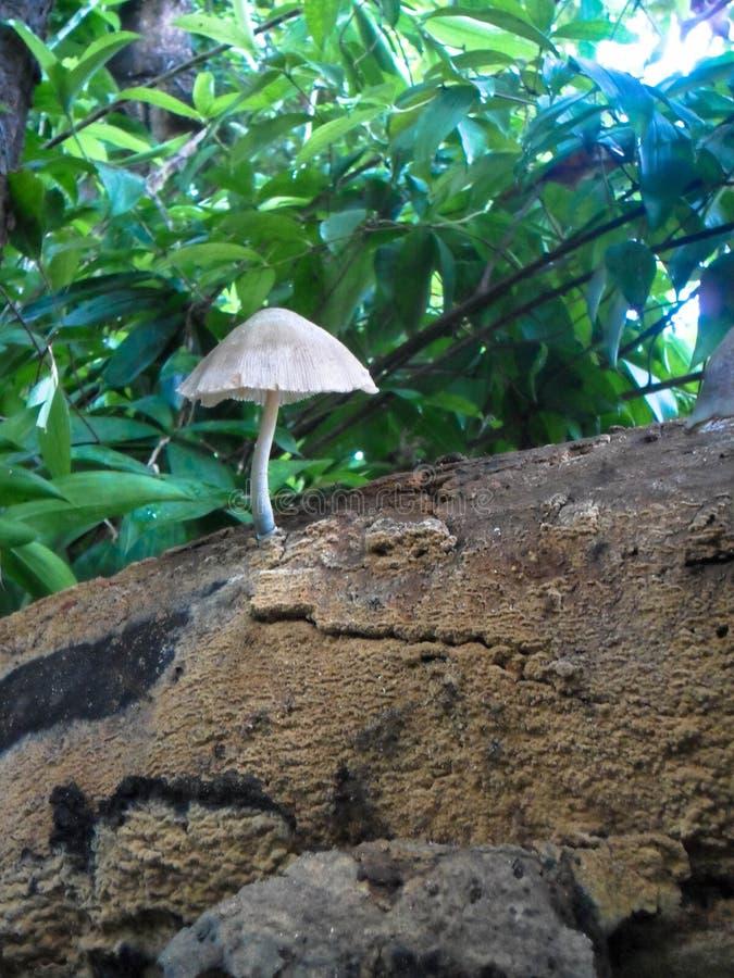 在树枝的蘑菇 免版税库存图片