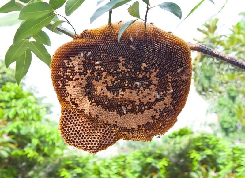 在树枝的蜂箱 库存图片