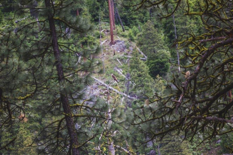 在树栖息的野生白鹭的羽毛在森林里 库存图片
