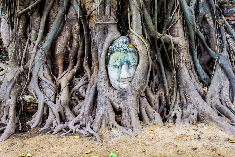头在树根源的石菩萨,阿尤特拉利夫雷斯是老资本  免版税库存图片