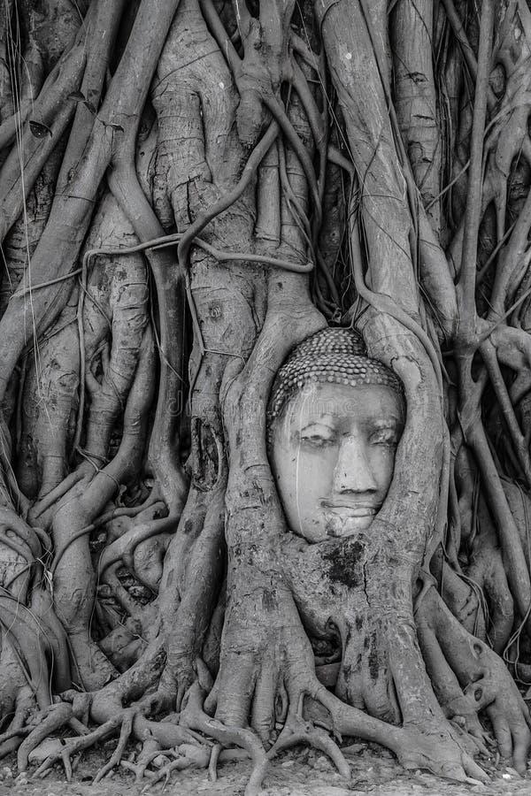 在树根的古色古香的菩萨头 免版税库存图片
