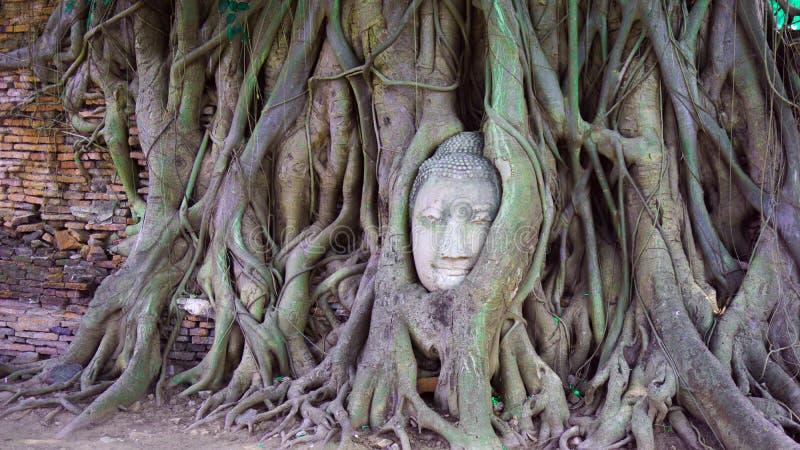 在树根的菩萨的头 免版税库存图片