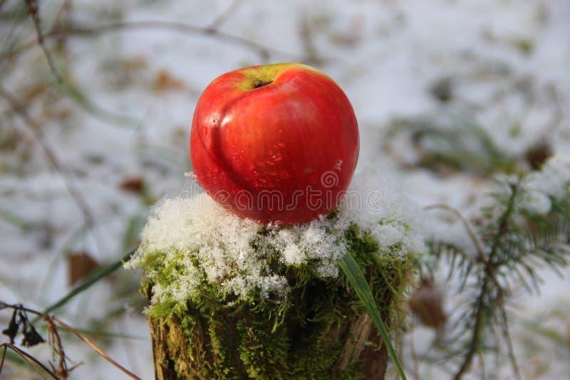 在树桩的冬天红色苹果 免版税库存照片