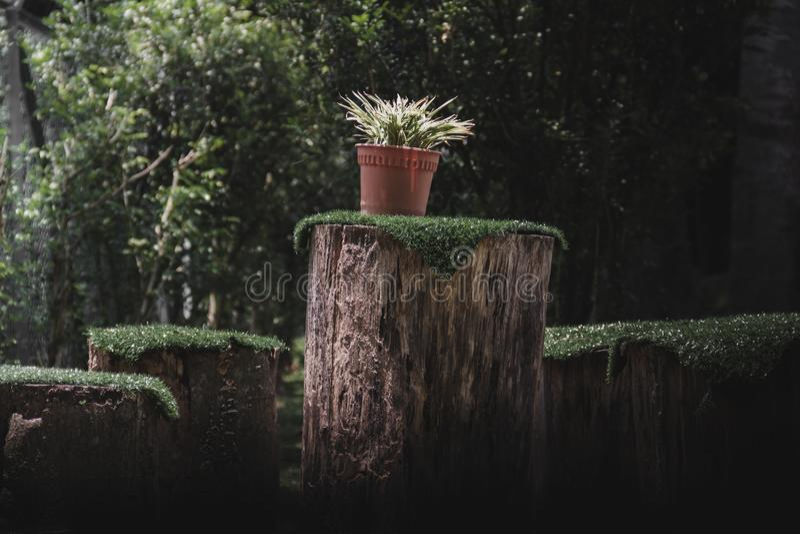 在树桩的植物罐 库存图片