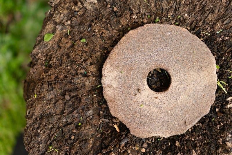 在树桩的老研的石头 免版税库存图片