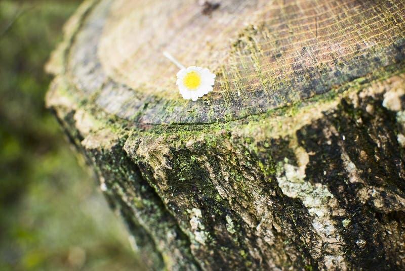 在树桩的花 库存图片