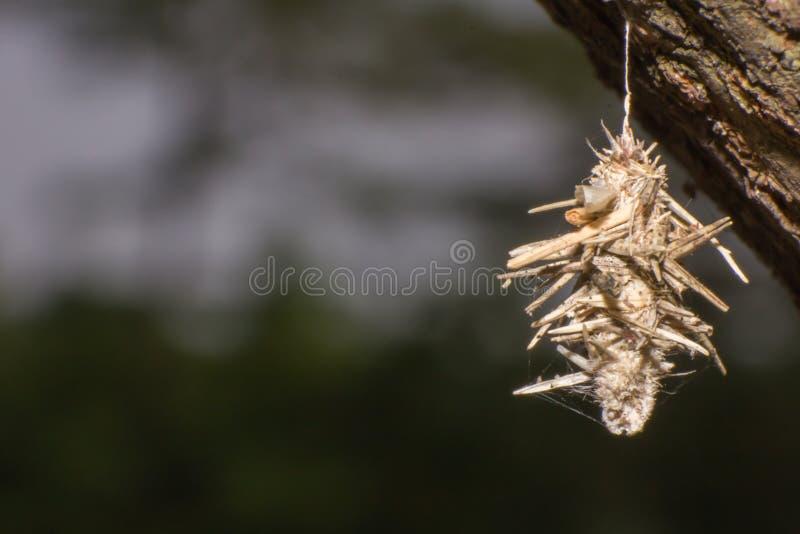 在树特写镜头的蠕虫巢 免版税库存照片