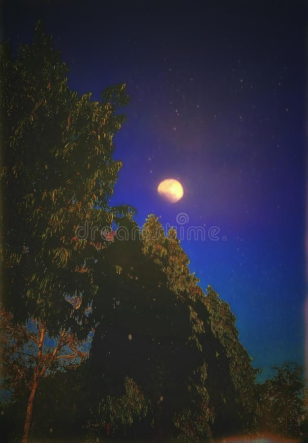 在树的一个美好的月亮视图在夜空 向量例证