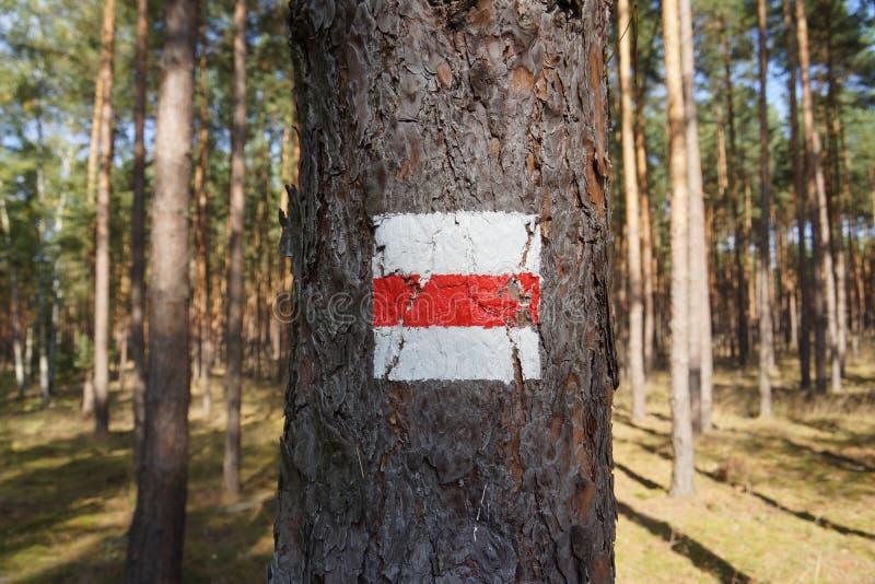 在树的供徒步旅行的小道标志 免版税库存图片