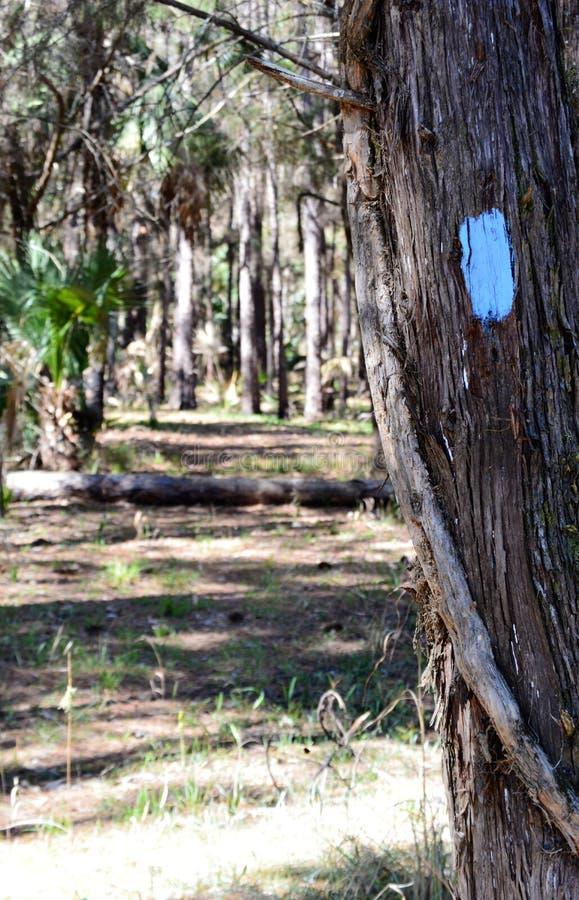 在树的供徒步旅行的小道被绘的标志 免版税图库摄影