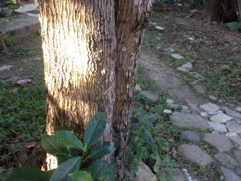 在树的光束 库存图片