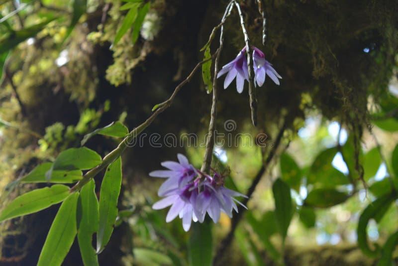 在树的兰花 库存照片