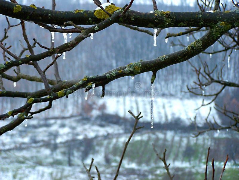 在树的冬天霜 免版税图库摄影