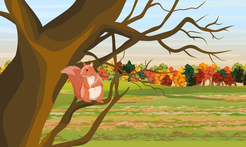 在树的分支的红松鼠 领域和秋天落叶林 库存例证